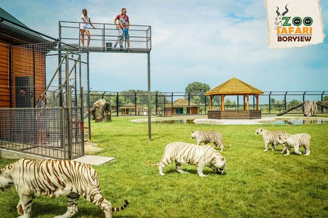 Zoo Safarii